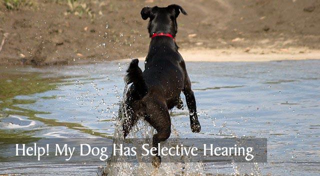 My Dog Has Selective Hearing