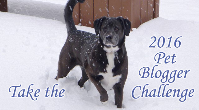 Take the 2016 Pet Blogger Challenge