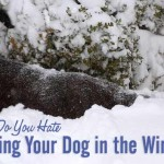 Do You Hate Walking Your Dog in the Winter?