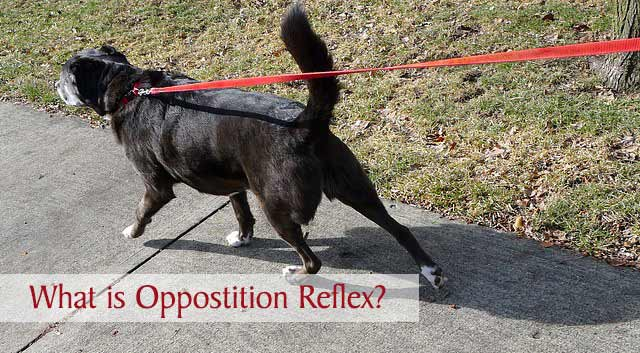 What is Opposition Reflex?