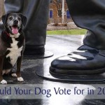Who Would Your Dog Vote for in 2016?
