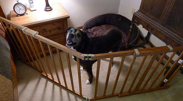 DIY Dog Pen