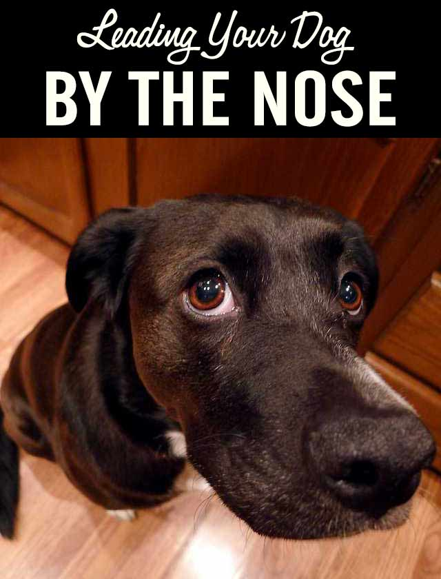 Leading Your Dog by the Nose