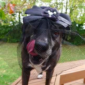 Grandma Dog