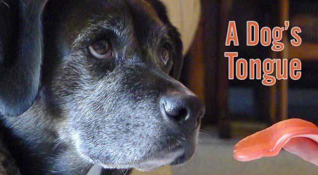 A Dog's Tongue
