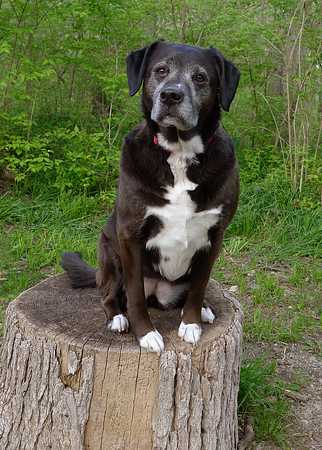 Dog Standing on Stump