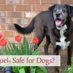 Is Apoquel Safe for Dogs?