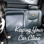 10 Tips for Keeping Your Car Clean With a Dog