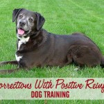 Using Corrections With Positive Reinforcement Dog Training