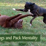 Alpha Dogs and Pack Mentality