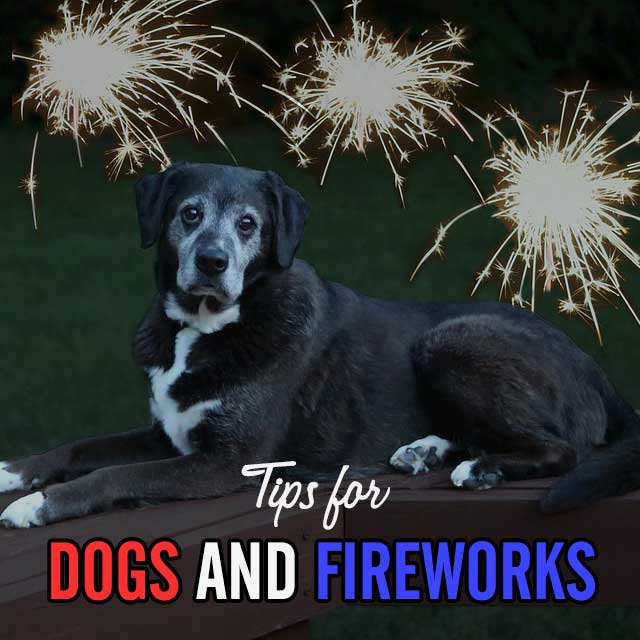 Tips for Dogs and Fireworks