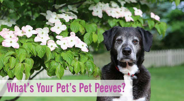 What's Your Pet's Pet Peeves?
