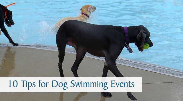 10 Tips for Dog Swimming Events