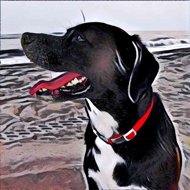 Dog With Prisma Femme Effect