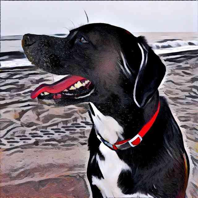 Dog With Prisma Femme Effect