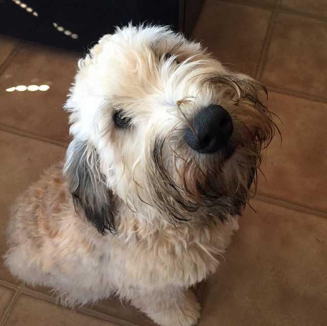 Dog Without Prisma Mosaic Effect