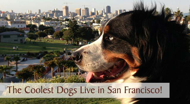 The Coolest Dogs Are San Francisco Dogs