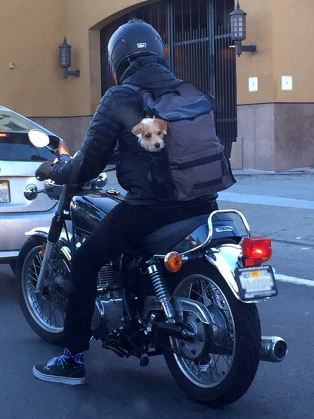 The Coolest Dogs Are S...