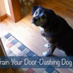 How to Train Your Door-Dashing Dog