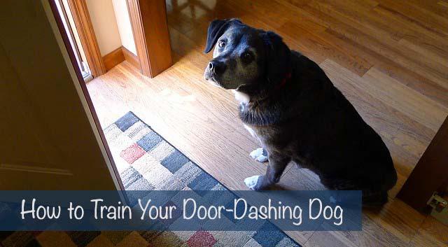 How to Train Your Door-Dashing Dog