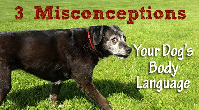 3 Misconceptions About Your Dog's Body Language