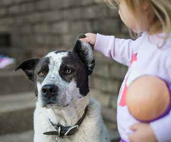 Child Teasing a Dog