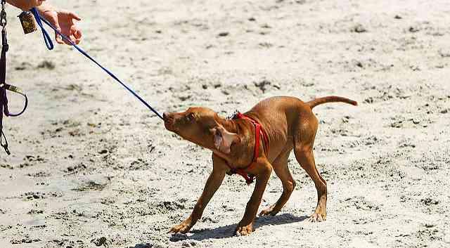 Pressuring a Dog