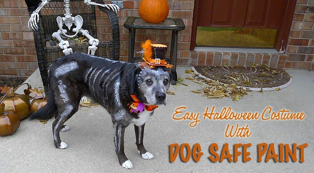 Skeleton Dog With Dog Safe Paint