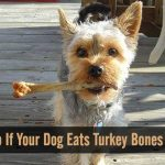 What to Do It Your Dog Eats Turkey Bones