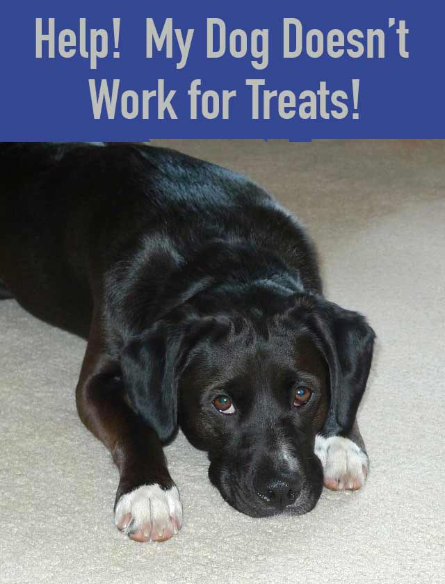 My Dog Doesn't Work for Treats