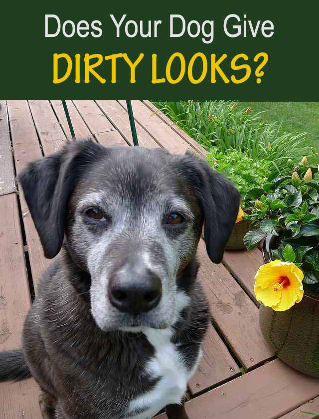 Does Your Dog Give Dirty Looks?