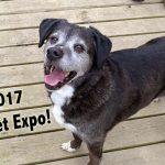 The 2017 Global Pet Expo