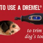 How to Use a Dremel Tool to Trim Your Dog's Toenails