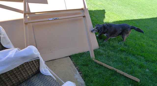 Dog Biting Cardboard Box