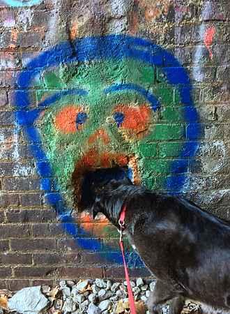 Dog Biting Bumble