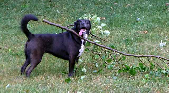 Dog Stuck on Tree Branch