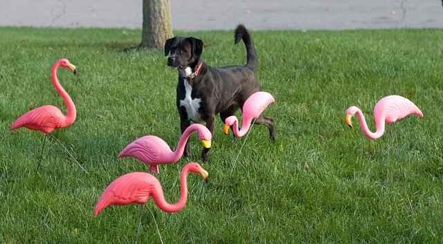 Pink flamingos dog