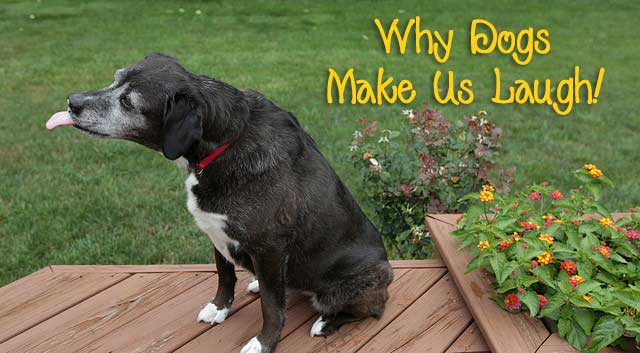 Why Dogs Make Us Laugh