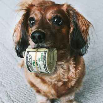 Dog With Cash