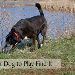 Teach Your Dog to Play Find It
