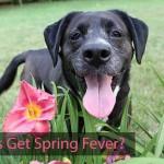 Do Dogs Get Spring Fever?