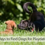 10 Easy Ways to Find Dogs for Playdates