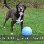 Searching for the Best Dog Ball - One World Futbol Review
