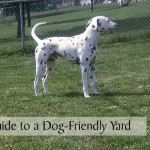 Max's Guide to a Dog-Friendly Yard