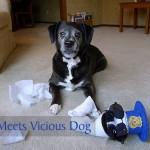 Sock Cop Meets Vicious Dog