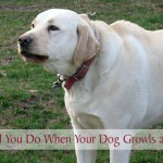 What Should You Do When Your Dog Growls at Someone