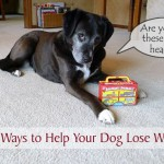 12 Simple Ways to Help Your Dog Lose Weight