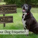 Check Your Petiquette - How's Your Dog Etiquette?
