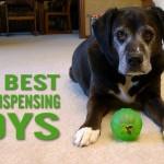 The Best Treat Dispensing Toys
