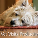 Doing Your Part to Make Vet Visits Productive